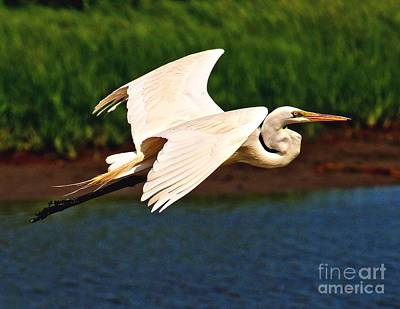 Photograph - Flight Of The Egret by Nick Zelinsky