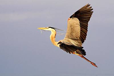 Photograph - Flight Of The Gbh by Ira Runyan