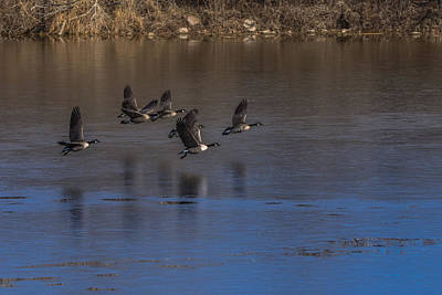 Flight Of The Geese Print by Ernie Echols