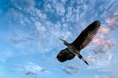 Clouds Photograph - Flight Of The Heron by Bob Orsillo