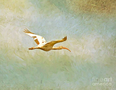 Photograph - Flight Of The Ibis by Kerri Farley