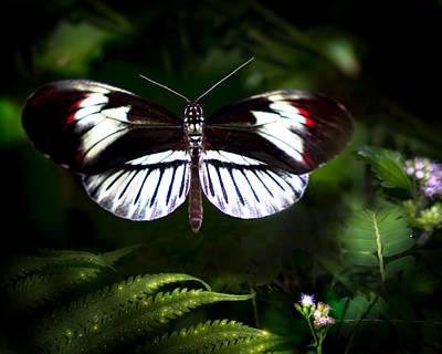 Piano Key Butterfly Photograph - Flight Of The Piano by Mark Andrew Thomas