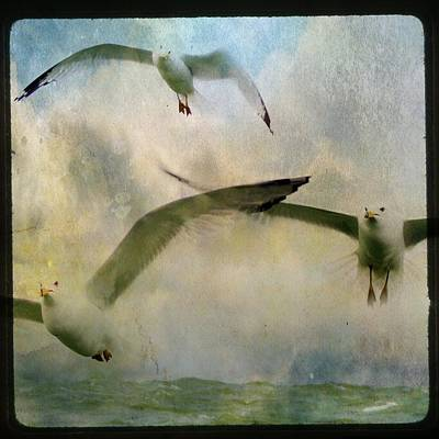 Flight Of The Seagulls Art Print by Gothicrow Images