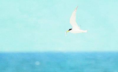 Photograph - Flight Of The Tern by Fraida Gutovich