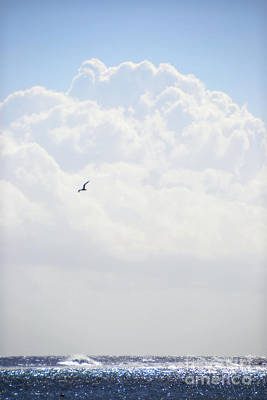 Photograph - Flight Over Shimmering Waters by Darla Wood