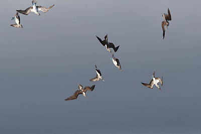 Photograph - Flight Squadron 1 by David Beebe
