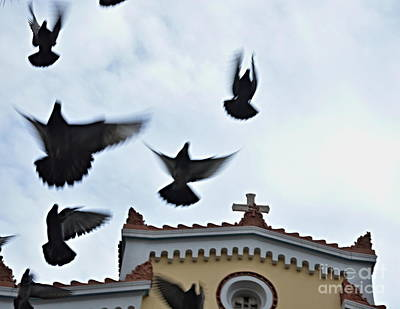 Photograph - Flight by Steven Liveoak