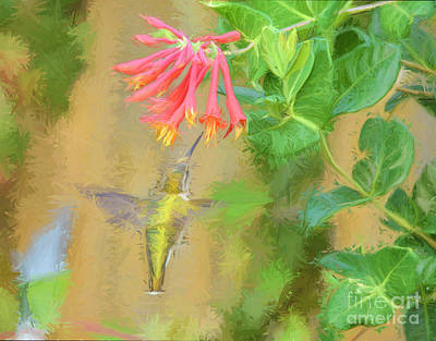 Photograph - Flight To The Flower by Kerri Farley