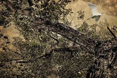 Photograph - Flight by Zoran Buletic
