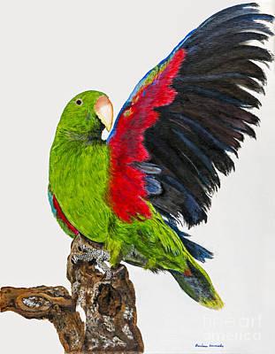 Flirting Parrot By Barbara Heinrichs Art Print by Sheldon Kralstein