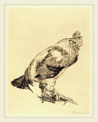 Félix Bracquemond French, 1833-1914, The Old Cock Art Print by Litz Collection