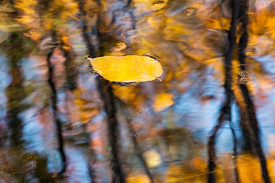 Photograph - Floater by Michael Blanchette