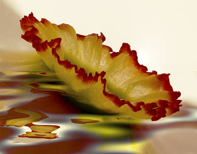Amaryllidaceae Photograph - Floating Daffy by Jean Noren