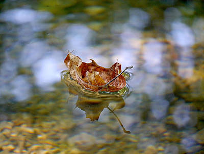 Photograph - Floating Fall Leaf by Richard Reeve