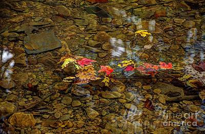 Photograph - Floating Fall Leaves by Paul Mashburn