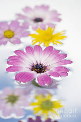 Ambient Photograph - Floating Flowers by Tim Gainey