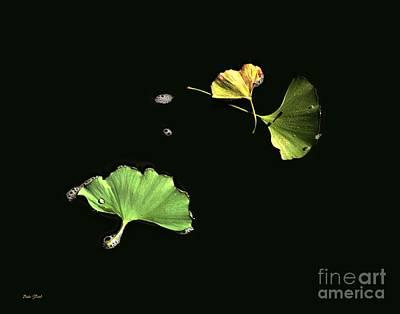 Floating Ginko Leaves Art Print