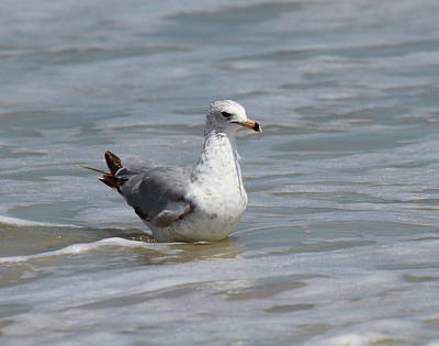 Gull Photograph - Floating Gull by Cathy Lindsey