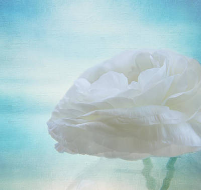 White Ranunculus Flower Photograph - Floating In The Clouds by Kim Hojnacki