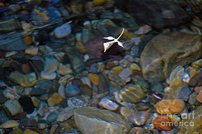 Photograph - Floating Leaf by NightVisions