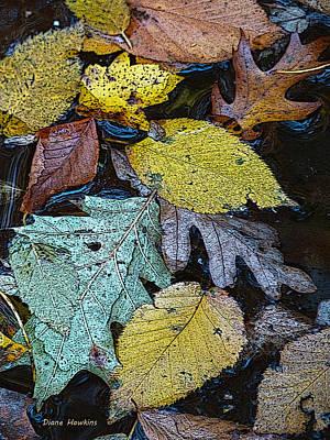 Typography Tees - Floating Leaves by Diane Hawkins