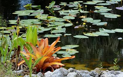 Photograph - Floating Lily Pond by Jody Lane