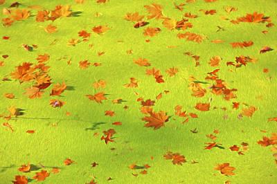 Floating Orange Leaves  Art Print by David Letts
