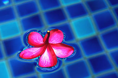 Photograph - Floating Petal by Kevin Duke