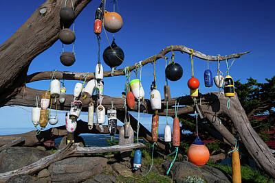 Photograph - Floats Hanging On A Tree, Battery Point by Panoramic Images
