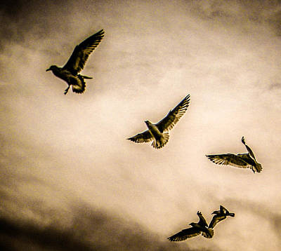 Photograph - Flock by Christy Usilton