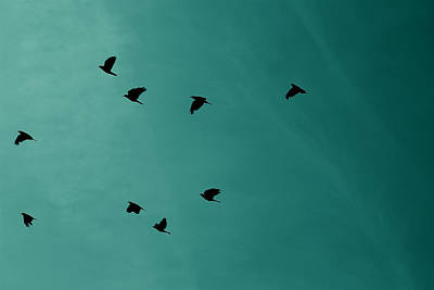 Digitalart Photograph - Flock Of Birds by Martin Newman