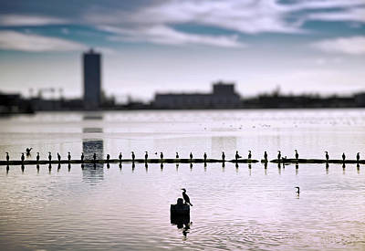 Of Birds Photograph - Flock Of Cormorants Phalacrocorax Carbo by Panoramic Images