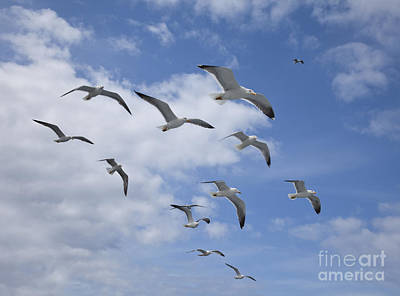 Seagull Photograph - Flock Of Lesser Black Backed Gulls   Larus Fuscus by Liz Leyden