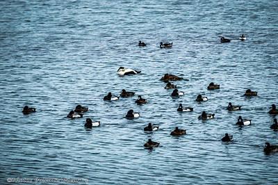 Fauna Photograph - Flock Of Sea Birds by Nate Wilson
