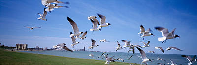 Flock Of Seagulls Flying On The Beach Art Print by Panoramic Images