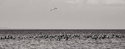 Flock Of Seagulls In Black And White Art Print by Sebastian Musial