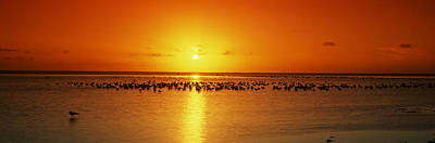 Flock Of Bird Photograph - Flock Of Seagulls On The Beach by Panoramic Images