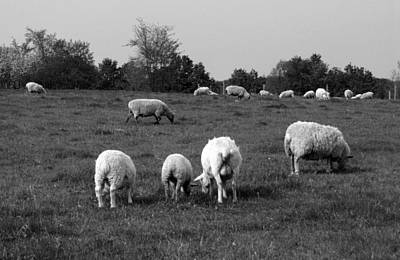 Photograph - Flock Of Sheep by Jim Vance