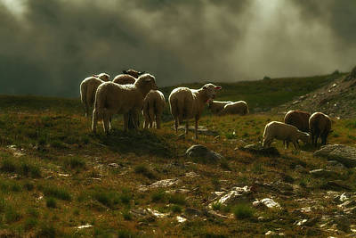 Photograph - Flock Of Sheep by Roberto Pagani