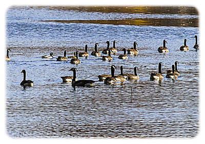 Flock On The Lake Art Print