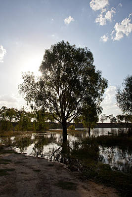 Photograph - Flooded Gum by Carole Hinding