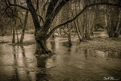 Flooded Tree Art Print