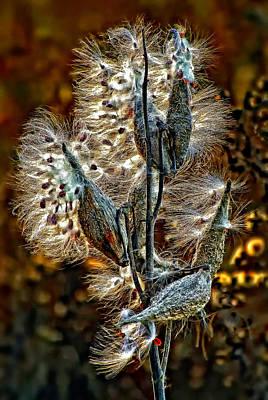 Milkweed Photograph - Floozy by Steve Harrington