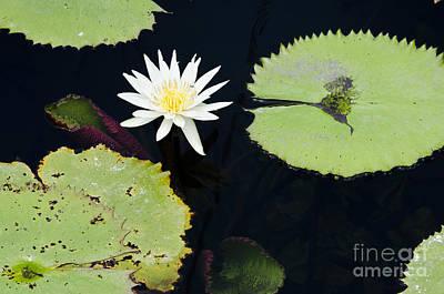 Photograph - Flor En El Pantano by Agus Aldalur