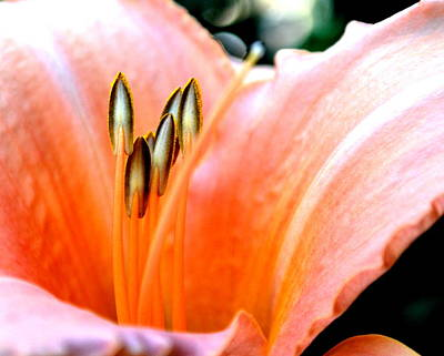 Art Print featuring the photograph Flora 5 by Mary Beth Landis