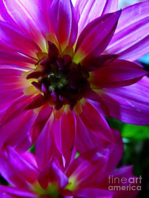 Photograph - Floral 364a by Scott B Bennett
