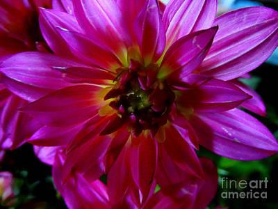 Photograph - Floral 375a by Scott B Bennett