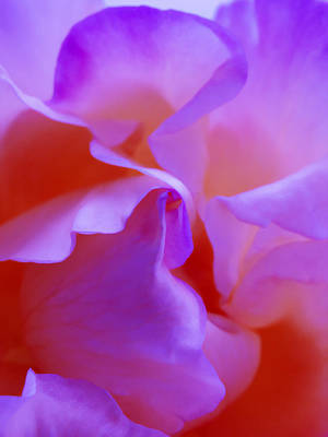 Abstract Red White Orange Pink Flowers Art Work Photography Art Print