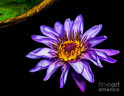 Photograph - Floral Beauty On Water by Nick Zelinsky