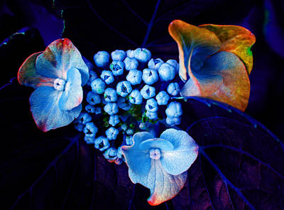 Photograph - Floral Blues by Laurie Tsemak